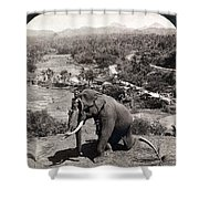 Elephant And Keeper, 1902 Shower Curtain