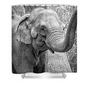 Elephant And Tree Trunk Black And White Shower Curtain