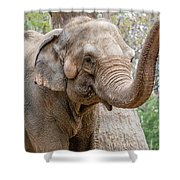 Elephant And Tree Trunk Shower Curtain
