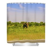 Elephant At The Road Shower Curtain