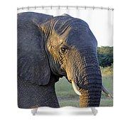 Elephant Close Up Shower Curtain