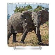 Elephant Crossing Dirt Track Facing Towards Camera Shower Curtain