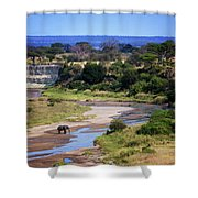 Elephant Crossing In Tarangire Shower Curtain