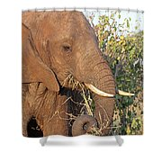 Elephant - Curled Trunk Shower Curtain