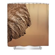 Elephant Ear Close-up Shower Curtain