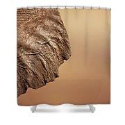 Elephant Ear Close-up Shower Curtain
