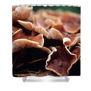 Elephant Ear Mushroom Family Shower Curtain