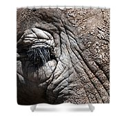 Elephant Eye Shower Curtain