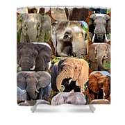Elephant Faces Shower Curtain