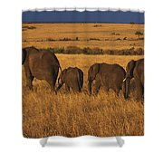 Elephant Family - Sunset Stroll Shower Curtain