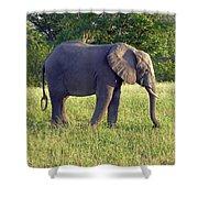 Elephant Feeding Shower Curtain