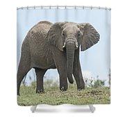 Elephant Forward On Mound Shower Curtain