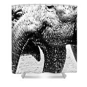 Elephant Gossip Shower Curtain