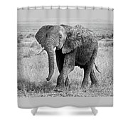 Elephant Happy And Free In Black And White Shower Curtain