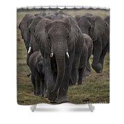 Elephant Herd Shower Curtain