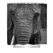 Elephant In Black And White Shower Curtain