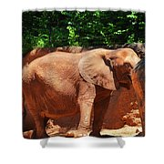 Elephant In Red Clay Shower Curtain