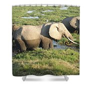 Elephant Mother And Calves Shower Curtain
