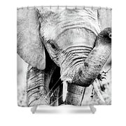 Elephant Portrait In Black And White Shower Curtain