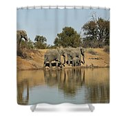 Elephant Refelction Shower Curtain