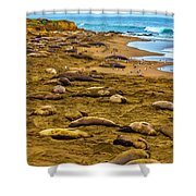 Elephant Seals Near Cambria  Shower Curtain