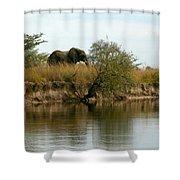Elephant Sighting Shower Curtain