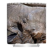 Elephant Smile Shower Curtain