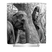 Elephant Tree Black And White  Shower Curtain