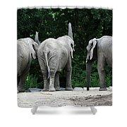 Elephant Trio Shower Curtain