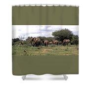 Elephant Walk Tsavo National Park Kenya Shower Curtain