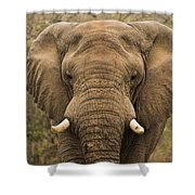 Elephant Watching Shower Curtain