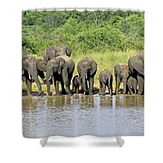 Elephants At The Waterhole   Shower Curtain