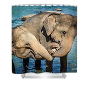 Elephants Bathing In A River Shower Curtain