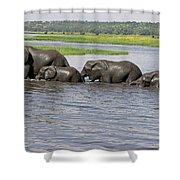 Elephants Crossing Chobe River Shower Curtain