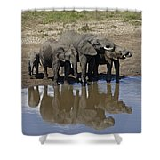 Elephants In The Mirror Shower Curtain