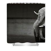 Elephants Interacting Shower Curtain