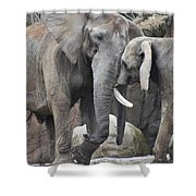 Elephants Playing 2 Shower Curtain