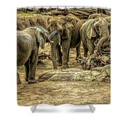 Elephants Social Shower Curtain