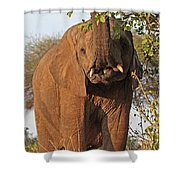 Elephant's Supper Time Shower Curtain