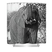 Elephant's Supper Time In Black And White Shower Curtain