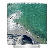 Eleven Brown Pelicans Shower Curtain