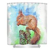 Elevenses - Red Squirrel Shower Curtain