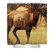 Elk #1 Shower Curtain