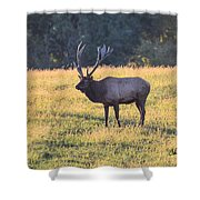 Elk At Sunset Shower Curtain