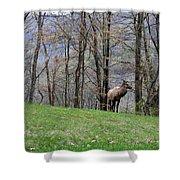 Elk, Blue Ridge Mountain Shower Curtain