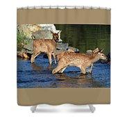Elk Calf Crossing River 1 Shower Curtain