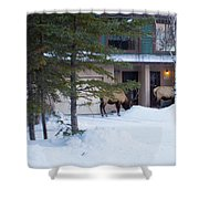 Elk Come Calling Shower Curtain
