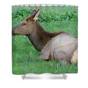Elk Cow Shower Curtain