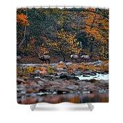 Elk Crossing Shower Curtain