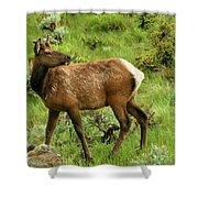 Elk Doe Shower Curtain